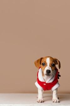 Netter beagle, der rotes kostüm trägt