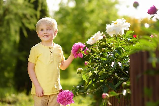 Netter blick des kleinen jungen auf die erstaunlichen purpurroten und weißen pfingstrosen im sonnigen inländischen garten