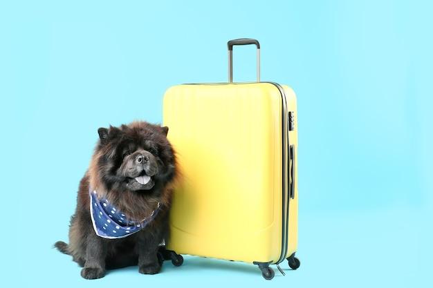 Netter chow-chow-hund mit koffer auf farbe