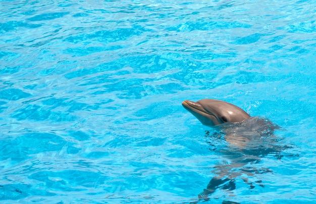 Netter delphin