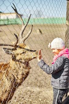Netter erwachsener hirsch leckt die hand eines kleinen mädchens, eines kindes, hirsche, die im naturgebiet leben, zoo