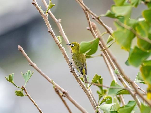Netter exotischer vogel, der auf einem ast in der mitte eines waldes steht