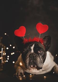 Netter französischer bulldoggenhund mit dem stirnband der herzen, die auf dem boden mit lichtern auf einer dunklen wand liegen.