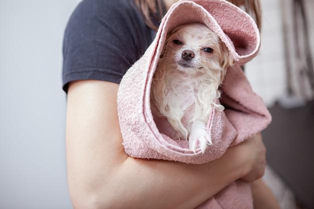 Netter glücklicher kleiner hund am pflegesalon
