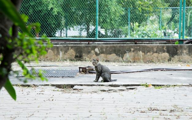 Netter grauer felis oder katzen, die auf dem boden spielen