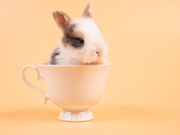 Netter hase in der tasse. junge schöne hase ostern baby braun kaninchen sitzen in einer weißen kaffeetasse auf gelb.