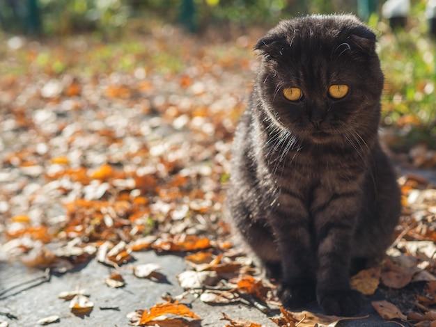 Netter herbst der schwarzen katze im garten