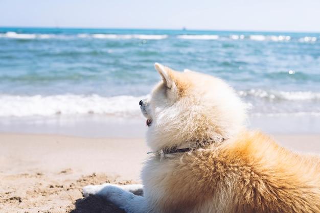 Netter hund am strand, der auf dem sand sitzt, sommerkonzept