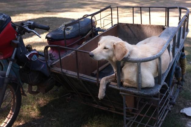 Netter hund auf einem beiwagenmotorrad.