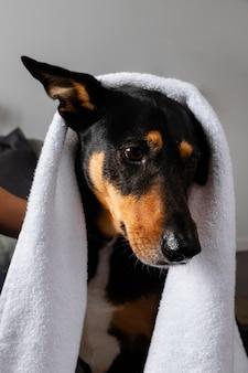 Netter hund bedeckt mit handtuch