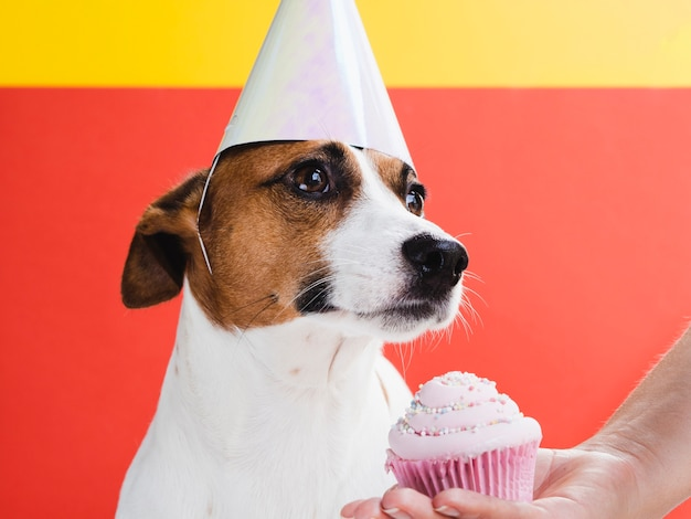 Netter hund behandelt mit köstlichem kleinem kuchen