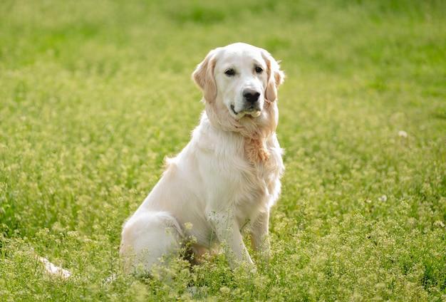 Netter hund, der auf blühendem feld sitzt