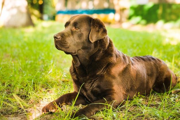 Netter hund, der auf grünem gras sitzt