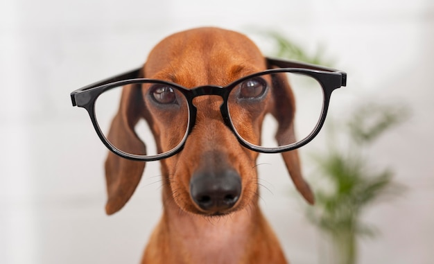 Netter hund, der brille trägt