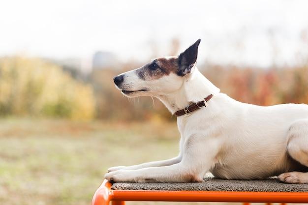 Netter hund, der im kinderpark kühlt