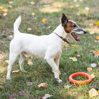 Netter hund, der im park spielt
