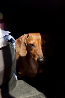 Netter hund, der in der nähe von auto sitzt