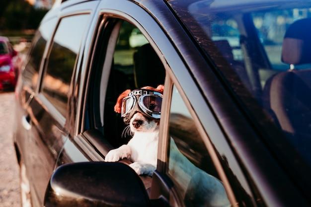 Netter hund, der in einem auto mit weinlesebrille bei sonnenuntergang reist