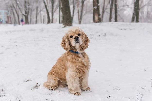 Netter hund, der kamera betrachtet, die draußen im schnee sitzt