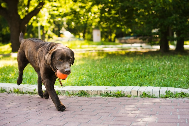 Netter hund, der mit ball im garten spielt