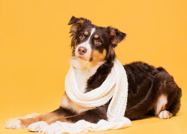 Netter hund, der mit einem schal sitzt