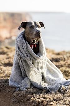 Netter hund, der mit einer decke bedeckt wird