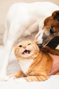 Netter hund, der mit katzenfreund spielt