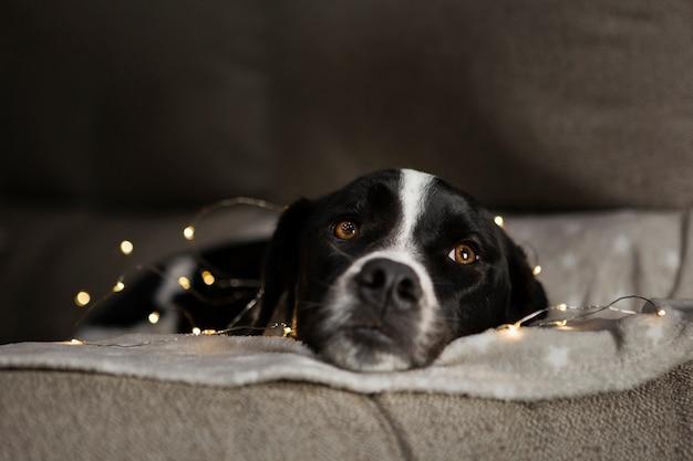 Netter hund, der mit weihnachtslichtern sitzt