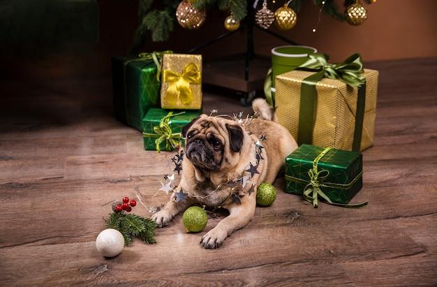 Netter hund des hohen winkels, der heraus geschenke aufpasst