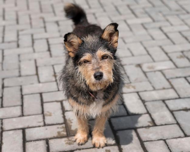 Netter hund draußen im tierheim, der darauf wartet, von jemandem adoptiert zu werden