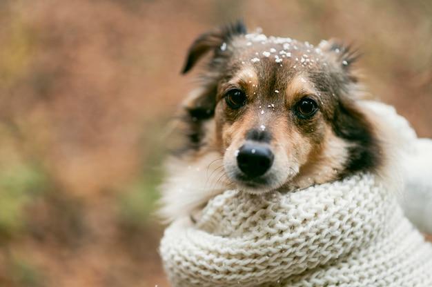 Netter hund draußen mit kopierraum