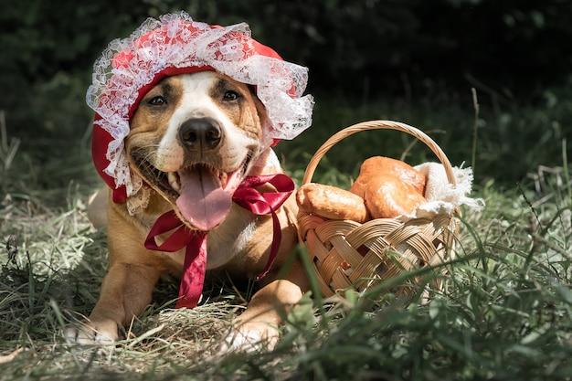 Netter hund im halloween-märchenkostüm der kleinen roten kappe. porträt des welpen, der in der roten reitenden haubenkappe und im korb mit gebäck im grünen waldhintergrund aufwirft