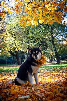 Netter hund mit blättern im herbstpark