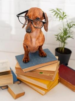 Netter hund mit den gläsern, die auf büchern sitzen