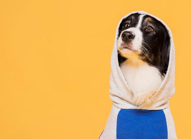 Netter hund mit einem kostüm