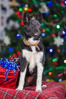 Netter hund mit weihnachtsschmuck