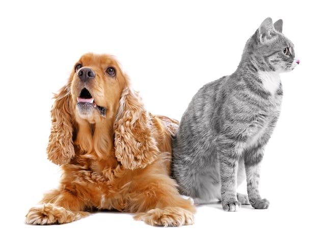 Netter hund und katze zusammen auf weißer wand