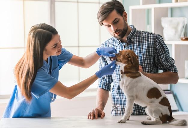 Netter hund wird vom weiblichen tierarzt überprüft.