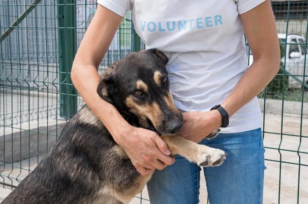 Netter hund zur adoption, der mit frau spielt