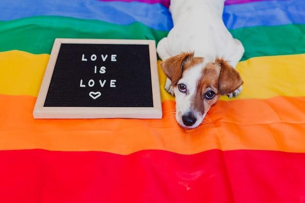 Netter hundesteckfassung russell, der auf regenbogen lgbt-flagge im schlafzimmer sitzt. briefkasten außerdem mit mitteilung liebe ist liebe. stolzmonat feiern und weltfriedenskonzept
