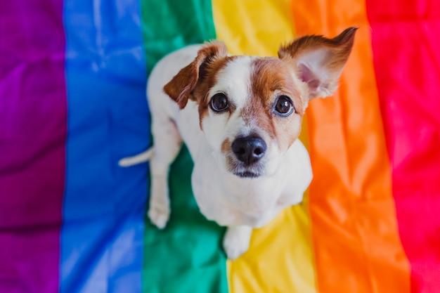 Netter hundesteckfassung russell, der auf regenbogen lgbt-flagge im schlafzimmer sitzt. stolzmonat feiern und weltfriedenskonzept