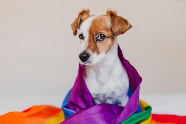 Netter hundesteckfassung russell eingewickelt in der regenbogen lgbt-flagge auf weißem bett im schlafzimmer. stolzmonat feiern und weltfriedenskonzept. liebe ist liebe