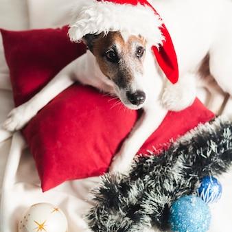 Netter jack russel terrier mit weihnachtsdekoration