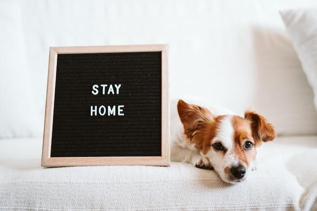 Netter jack russell hund auf dem sofa mit briefbrett mit stay home nachricht.