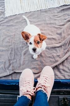 Netter jack russell hund und seine unerkennbare besitzerin, die sich in einem van entspannt. reisekonzept