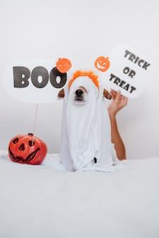 Netter jack russell hund zu hause mit geisterkostüm. halloween dekoration. frauenhand, die boo zeichen hält