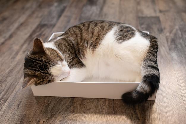 Netter junger haus zweifarbiger tabby und weiße katze, die im pappkarton auf dem boden schlafen.