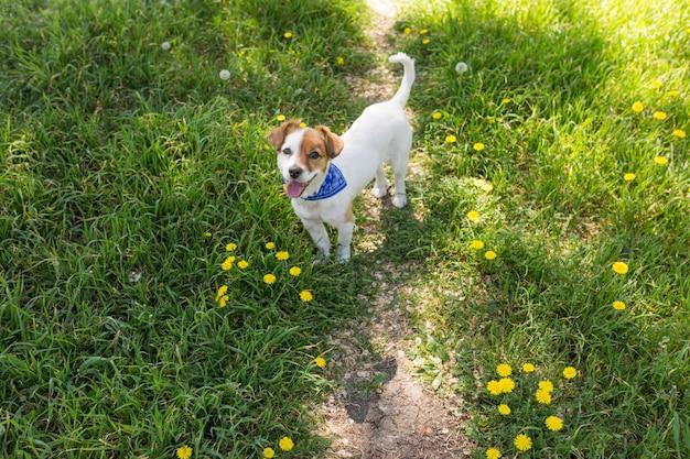 Netter junger hund, der spaß in einem park im freien hat. frühlingszeit. grüner hintergrund