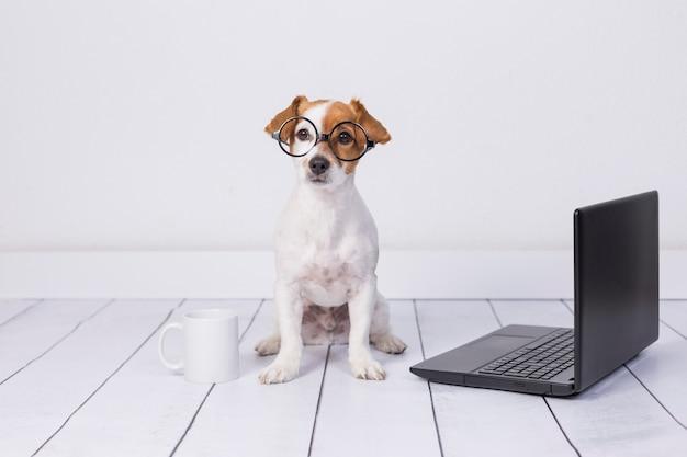Netter junger kleiner hund, der auf dem boden sitzt und an laptop arbeitet. neben ihm eine brille und eine tasse tee oder kaffee. haustiere drinnen