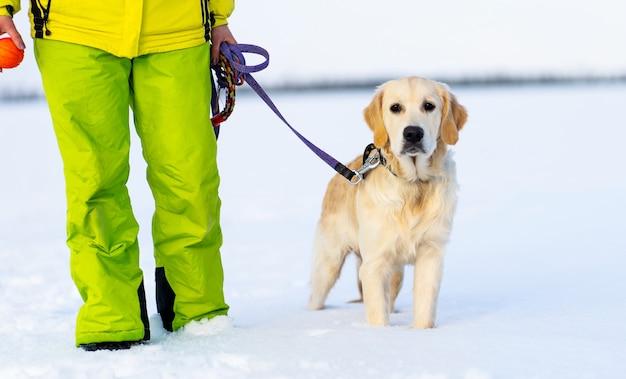 Netter junger retrieverhund an der leine in der nähe des besitzers während des winterspaziergangs